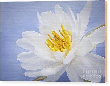 Lotus Flower Wood Print by Elena Elisseeva