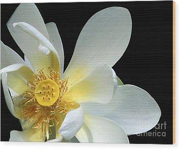 Lotus From Above Wood Print by Sabrina L Ryan
