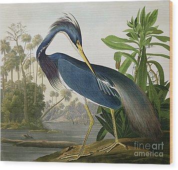 Louisiana Heron Wood Print by John James Audubon