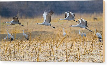 Low Level Flyby Wood Print by Mike Dawson