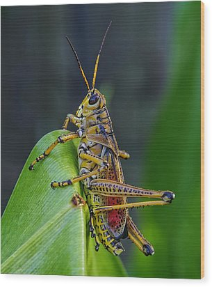 Lubber Grasshopper Wood Print by Richard Rizzo