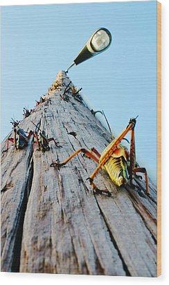 Lubber's Pole Wood Print by Lynda Dawson-Youngclaus