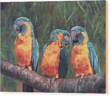 Macaws Wood Print by David Stribbling