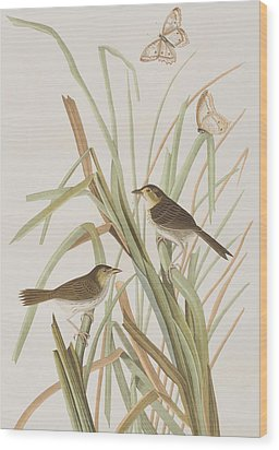 Macgillivray's Finch  Wood Print by John James Audubon