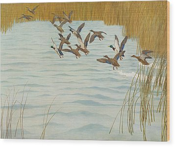 Mallards In Autumn Wood Print by Newell Convers Wyeth