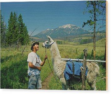 Man Teasing A Llama Wood Print by Jerry Voss