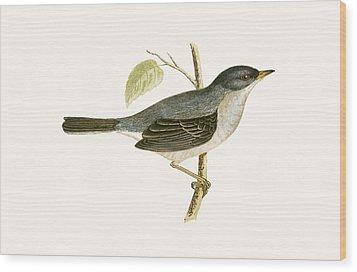 Marmora's Warbler Wood Print by English School