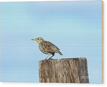 Meadowlark Roost Wood Print by Mike Dawson