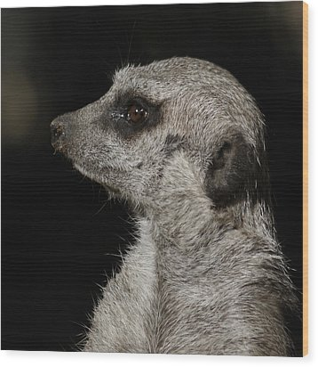 Meerkat Profile Wood Print by Ernie Echols