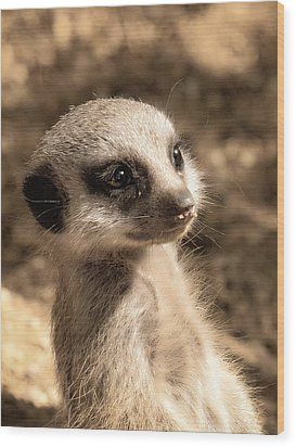 Meerkatportrait Wood Print by Chris Boulton