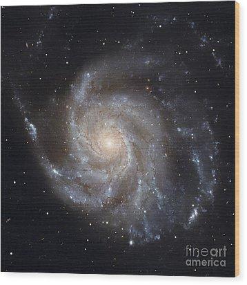 Messier 101, The Pinwheel Galaxy Wood Print by Stocktrek Images