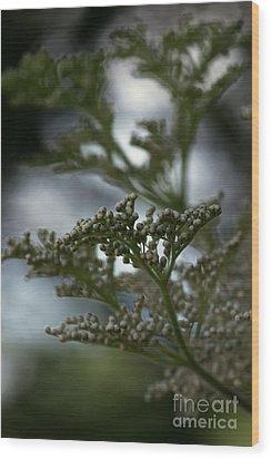 Mirrored Wood Print by Linda Shafer