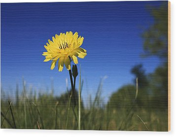 Morning Flower Wood Print by Gulf Island Photography and Images