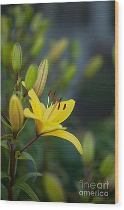 Morning Lily Wood Print by Mike Reid