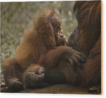 Mother's Love Wood Print by C.s.tjandra