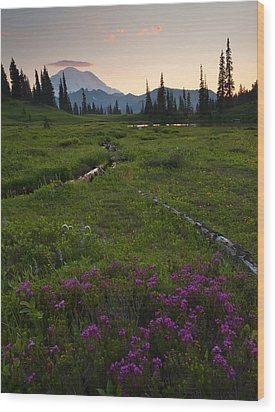 Mountain Heather Sunset Wood Print by Mike  Dawson