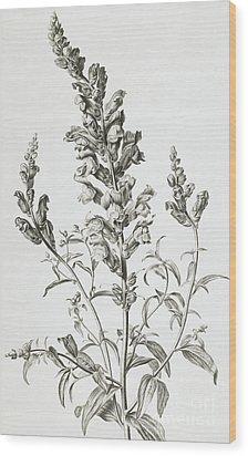 Mufle De Veau Wood Print by Gerard van Spaendonck