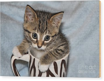 Mug Kitten Wood Print by Teresa Zieba