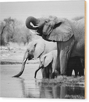 Namibia Elephants Wood Print by Nina Papiorek