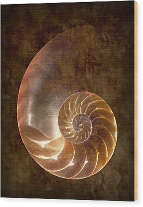 Nautilus Wood Print by Tom Mc Nemar