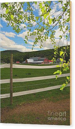 New England Farm Wood Print by Catherine Reusch  Daley