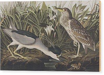 Night Heron Or Qua Bird Wood Print by John James Audubon