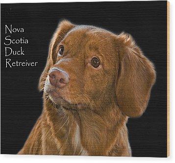 Nova Scotia Duck Retreiver Wood Print by Larry Linton