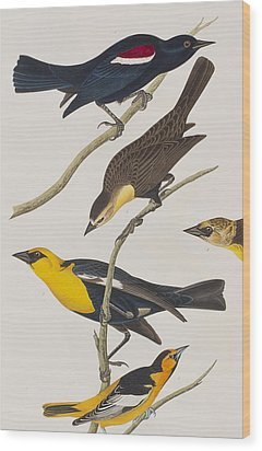 Nuttall's Starling Yellow-headed Troopial Bullock's Oriole Wood Print by John James Audubon