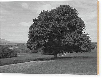 Oak Tree - Killarney National Park Wood Print by Aidan Moran
