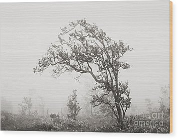 Ohia Lehua Tree Wood Print by Greg Vaughn - Printscapes