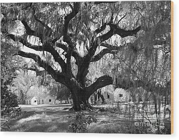Old Plantation Tree Wood Print by Melody Jones