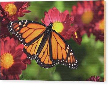 Orange Drift Monarch Butterfly Wood Print by Christina Rollo