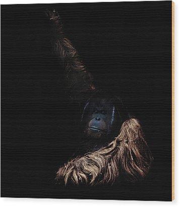 Orangutan Wood Print by Martin Newman