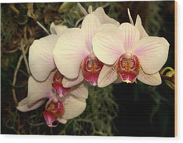 Orchid 19 Wood Print by Marty Koch