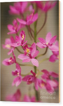 Orchids On Stem Wood Print by Ron Dahlquist - Printscapes