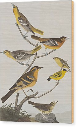 Orioles Thrushes And Goldfinches Wood Print by John James Audubon