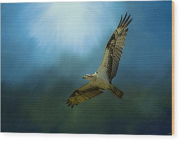 Osprey In The Evening Light Wood Print by Jai Johnson