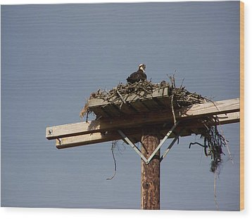 Osprey Nest Wood Print by Laurie Kidd