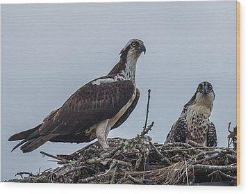 Osprey On A Nest Wood Print by Paul Freidlund