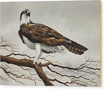Osprey Sea Hawk Wood Print by James Williamson