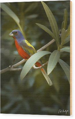 Painted Bunting Male Wood Print by Phill Doherty