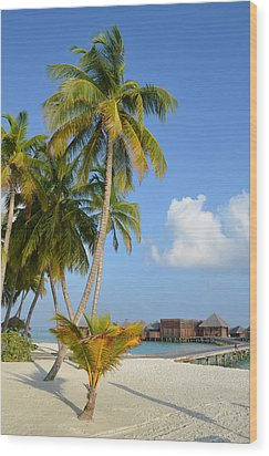 Palm Paradise Wood Print by Corinne Rhode