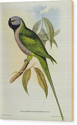 Parakeet Wood Print by John Gould
