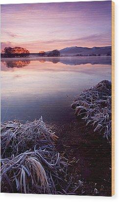 Pastel Dawn Wood Print by Mike  Dawson