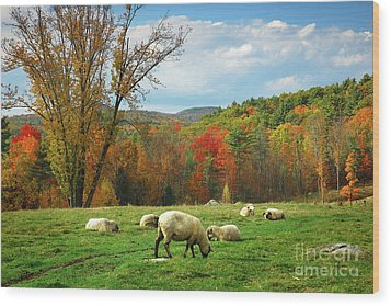 Pasture - New England Fall Landscape Sheep Wood Print by Jon Holiday