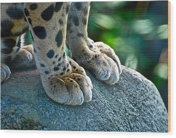 Paws For Effect Wood Print by Gene Sizemore