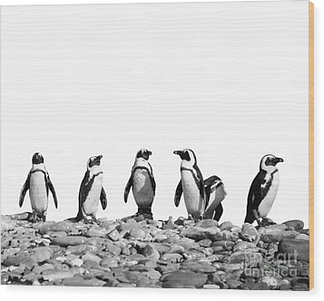 Penguins Wood Print by Delphimages Photo Creations