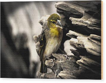 Perched Wood Print by Martin Newman