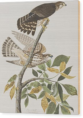 Pigeon Hawk Wood Print by John James Audubon
