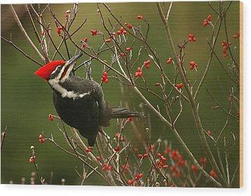 Pileated Woodpecker Wood Print by Alan Lenk